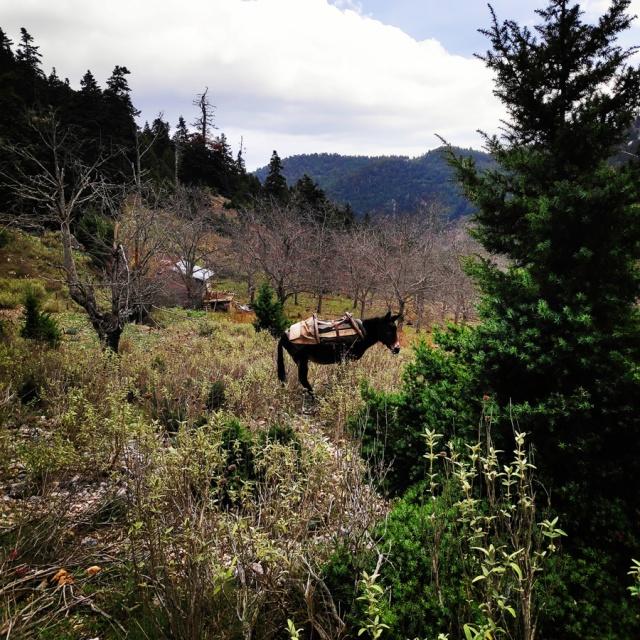 Hiking_Parnonas_Greece_212007_808