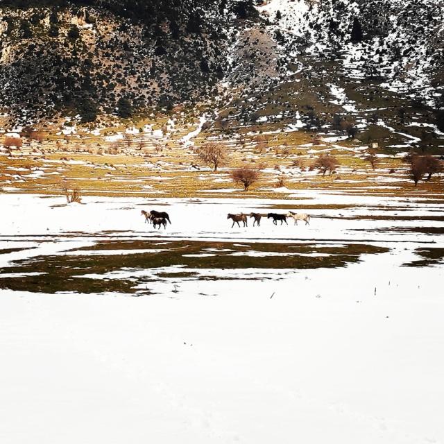 Hiking_Climbing_Kyllini_Ziria_Profitis_Elias_Peak_105850_195