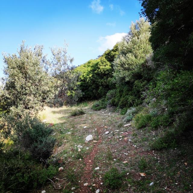 South-West_Ridge_Ortholithi_Mountain_161056_517