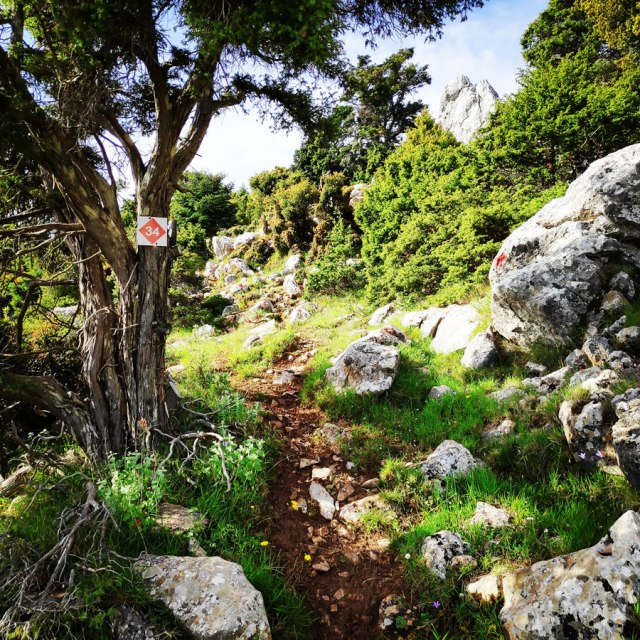 Artemisio_Mountain_Hiking_170501_709