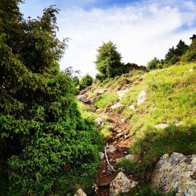Artemisio_Mountain_Hiking_170535_676