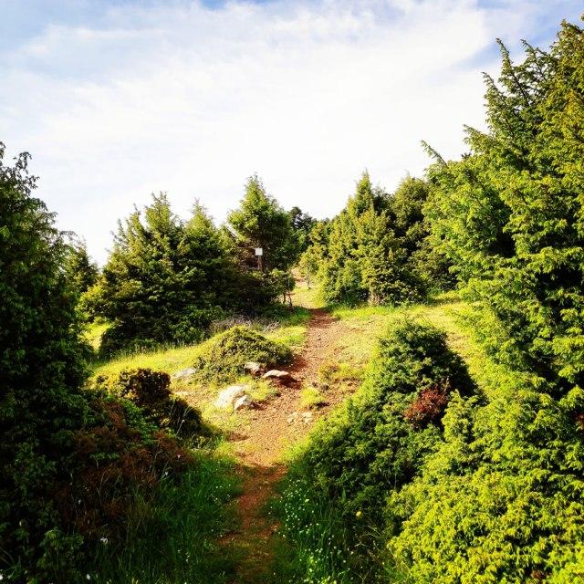 Artemisio_Mountain_Hiking_170600_453