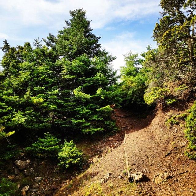 Artemisio_Mountain_Hiking_170628_232