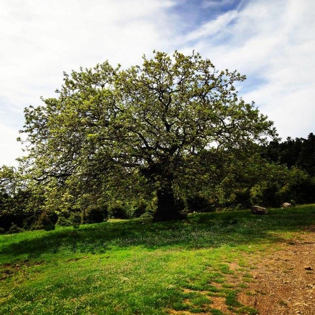 Artemisio_Mountain_Hiking_170721_900