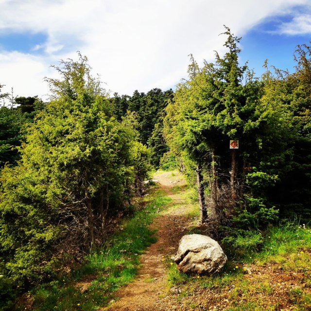 Artemisio_Mountain_Hiking_170746_854