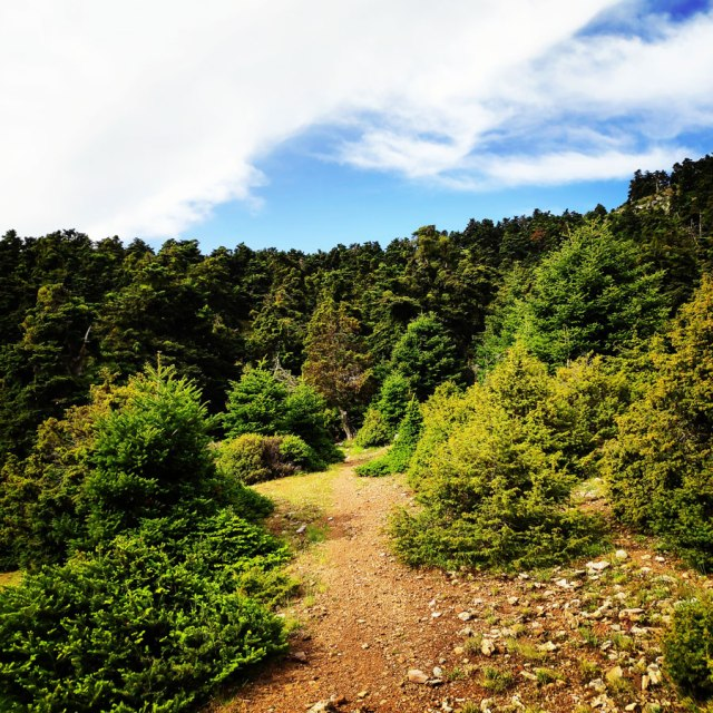 Artemisio_Mountain_Hiking_170809_760