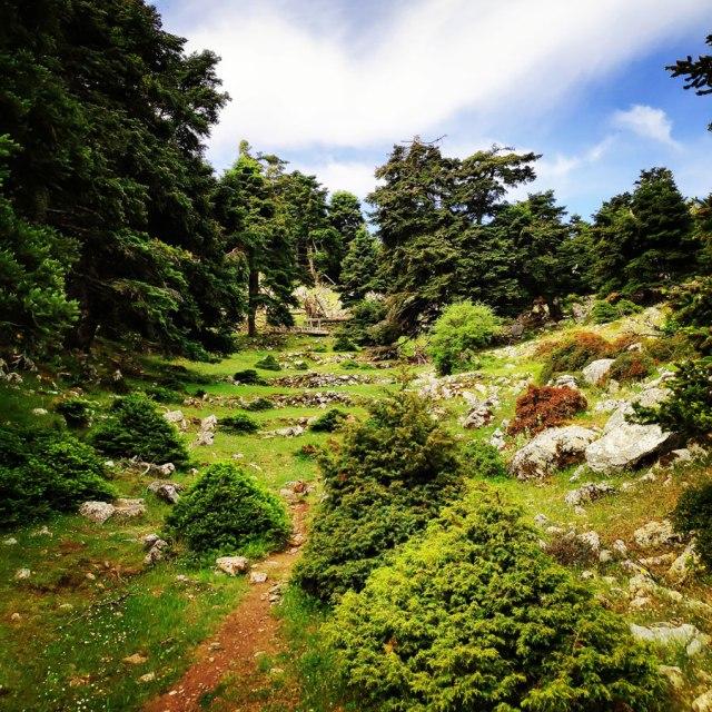 Artemisio_Mountain_Hiking_170902_311