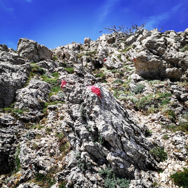 Artemisio_Mountain_Hiking_171359_718