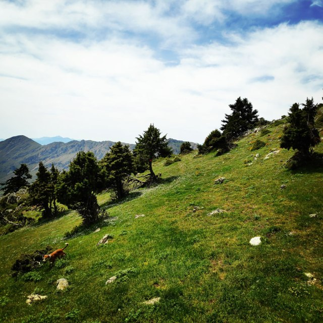 Artemisio_Mountain_Hiking_171547_760