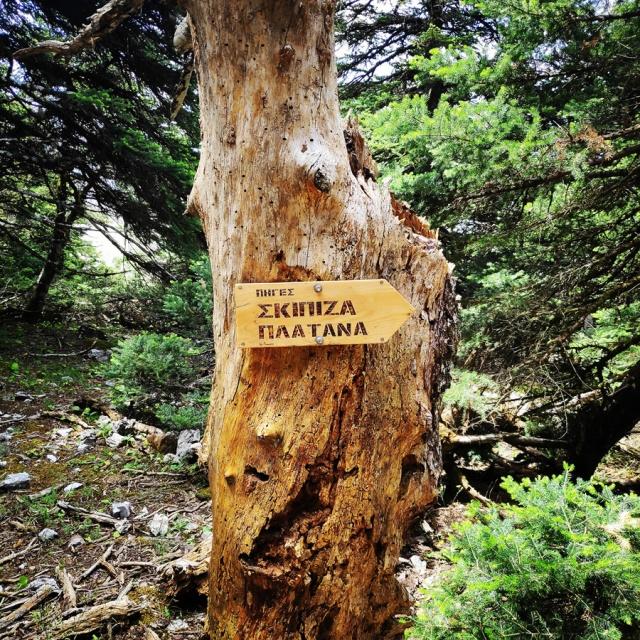 Parnitha_Wildfire_Observation_Station_Skipiza_092915_282