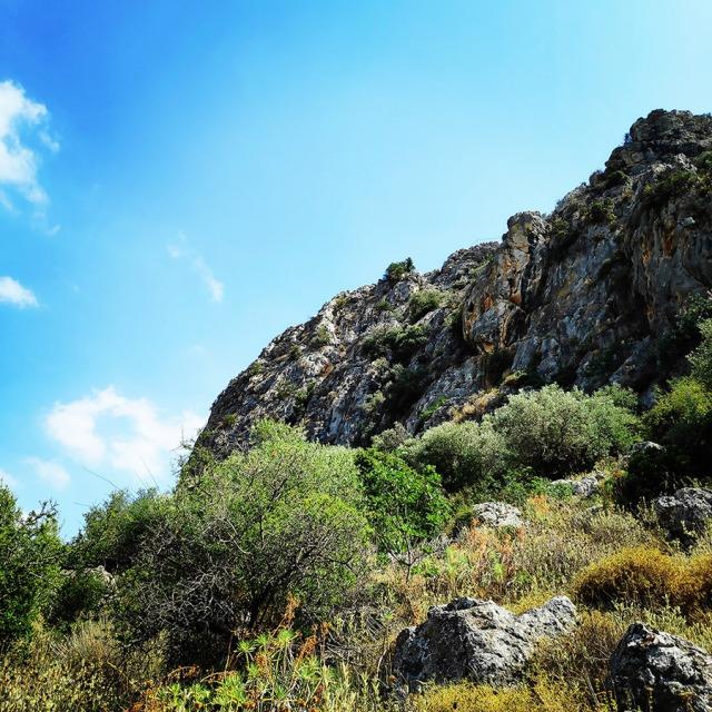 Climbing_Diaberis_Pothos_Profitis_Elias_Asini_163127_784