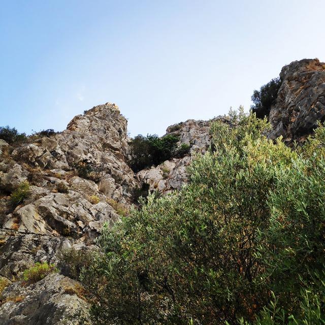 Climbing_Diaberis_Pothos_Profitis_Elias_Asini_163316_562