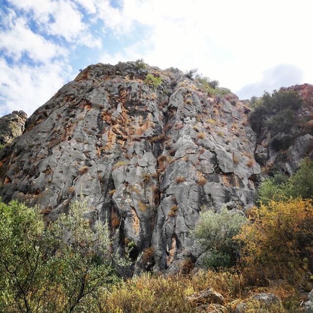 Climbing_Diaberis_Pothos_Profitis_Elias_Asini_225021_708
