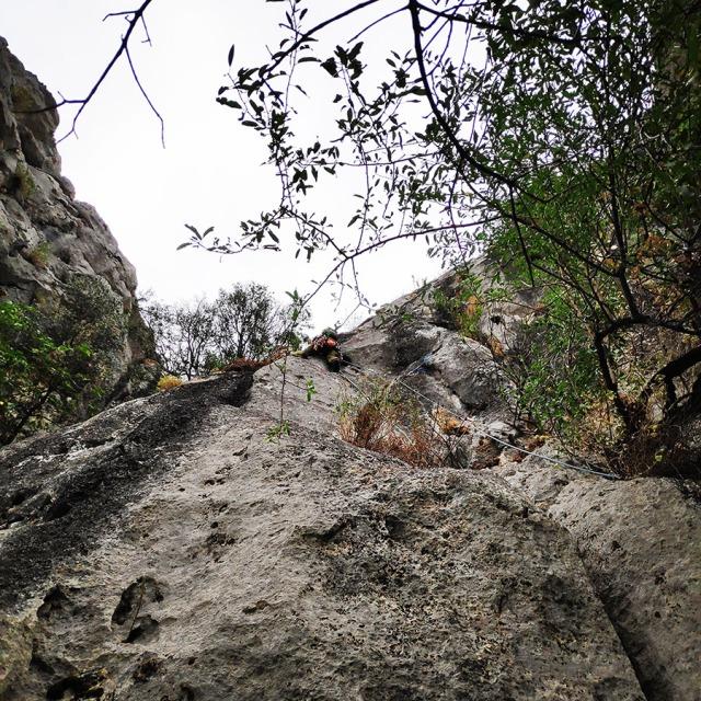 Climbing_Diaberis_Pothos_Profitis_Elias_Asini_225642_723