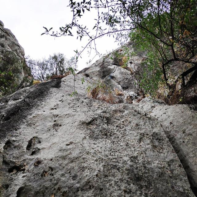 Climbing_Diaberis_Pothos_Profitis_Elias_Asini_225817_716