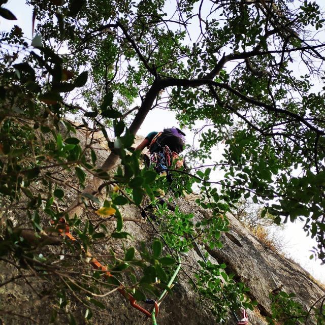 Climbing_Diaberis_Pothos_Profitis_Elias_Asini_230129_607