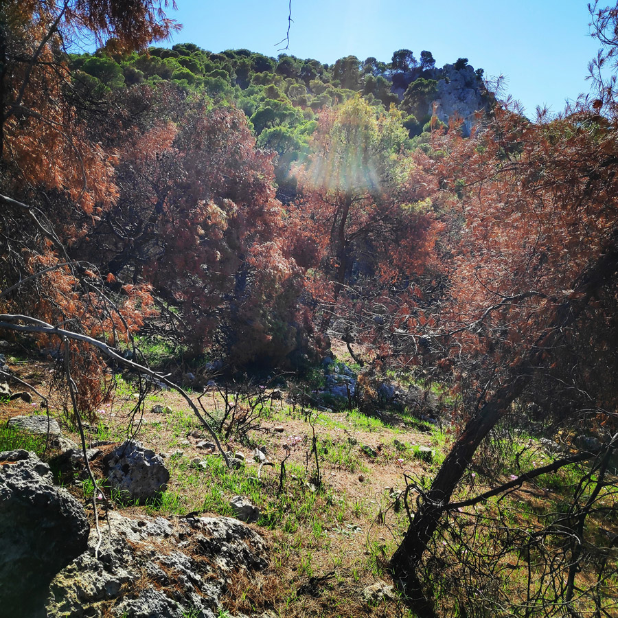 Multipitch_climbing_Tsirio_To_Proto_Onia_mountain_073656_847