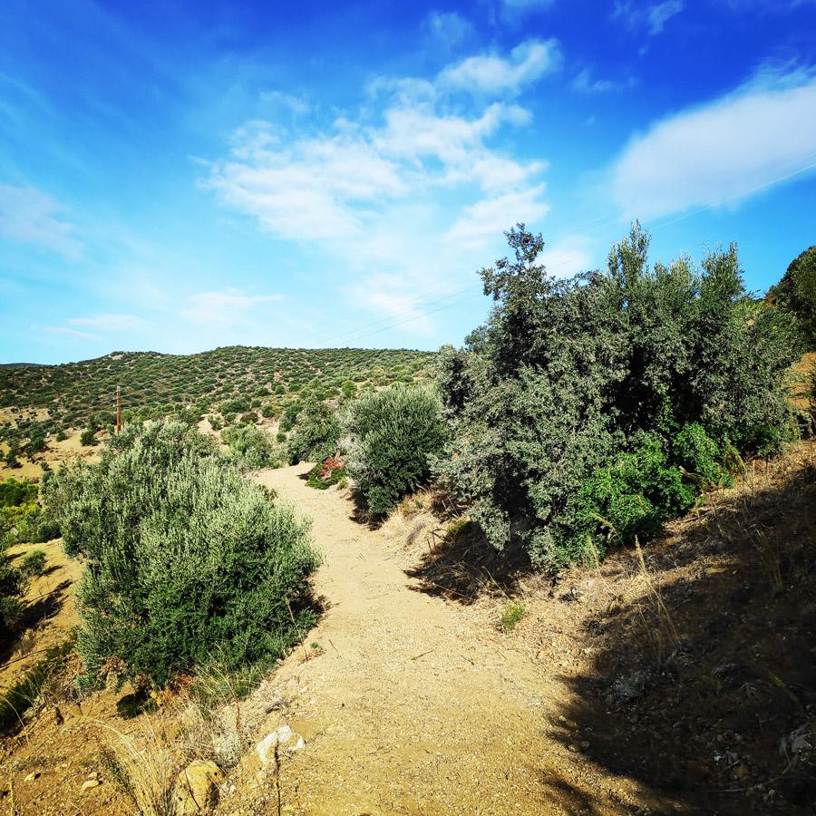 Climbing_Dardiza_Ermioni_Ermionida_113648_287