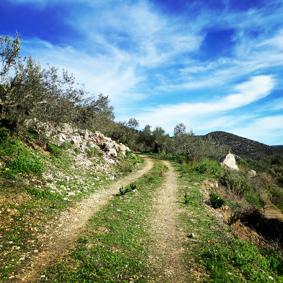 Climbing_Kandia_Argolis_Agios_Andonis_192903_235