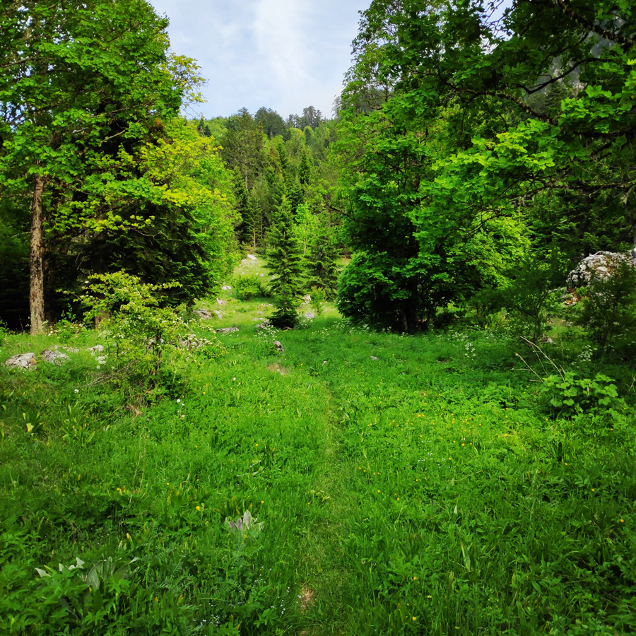 Mount_Tymfi_Pindos_North_Side_Thru-Hike_Part1_Konitsa_Moni_Stomiou_Sadi_Mygas_162039_157