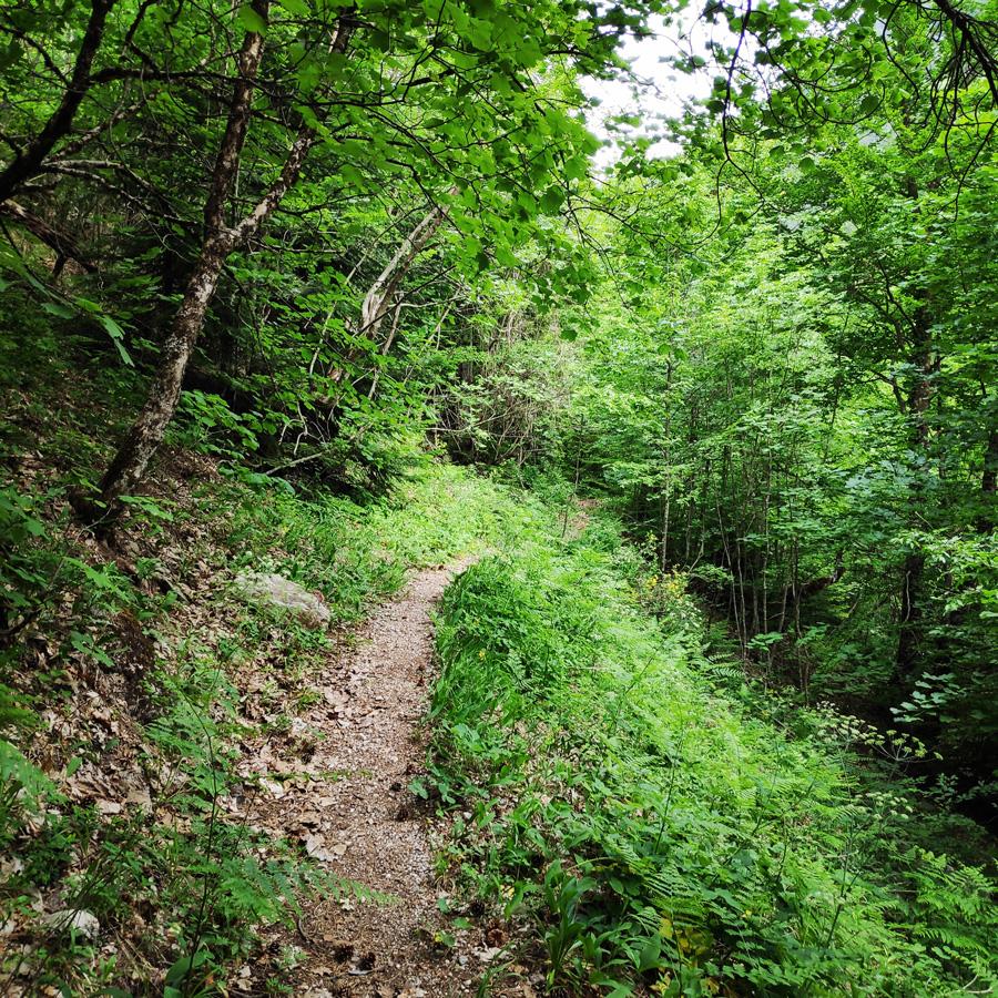 Mount_Tymfi_Pindos_North_Side_Thru-Hike_Part1_Konitsa_Moni_Stomiou_Sadi_Mygas_165223_223