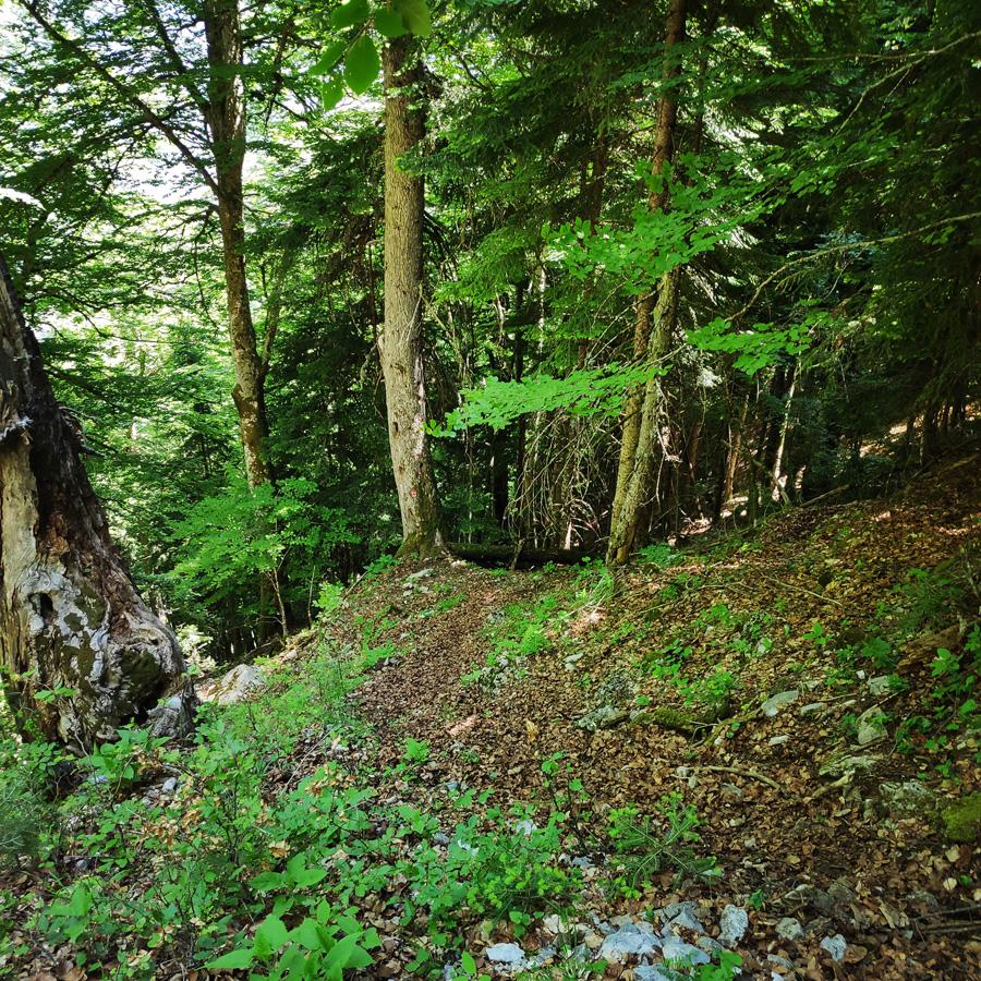 Mount_Tymfi_Pindos_North_Side_Thru-Hike_Part3_Astraka_Refuge_Davalista_Konitsa_122041_199